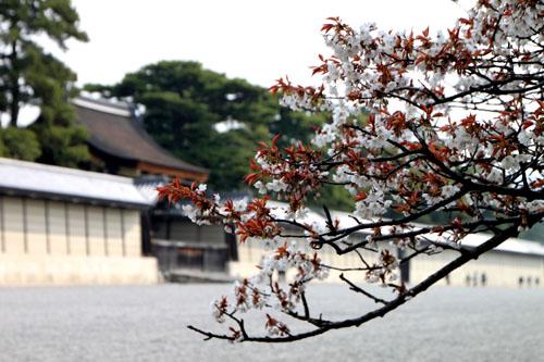 京都御苑 拾翆邸と山桜_e0048413_2239389.jpg