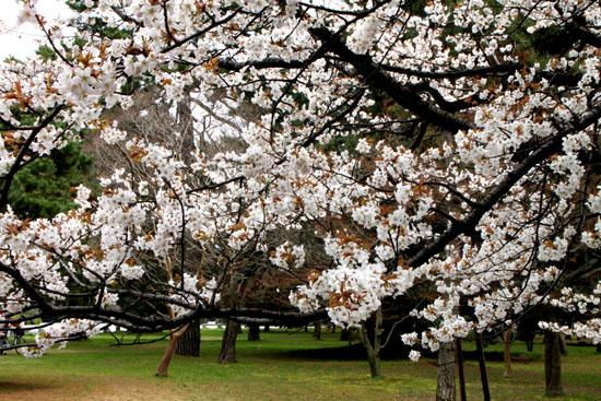 京都御苑 拾翆邸と山桜_e0048413_22394110.jpg