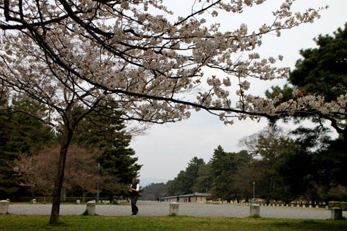 京都御苑 拾翆邸と山桜_e0048413_2240189.jpg