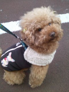アフロ犬、嵐君と出会う_c0209415_18575197.jpg