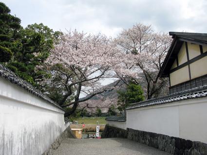 五十鈴川 桜情報_f0129726_21431492.jpg