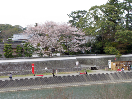 五十鈴川 桜情報_f0129726_2145026.jpg