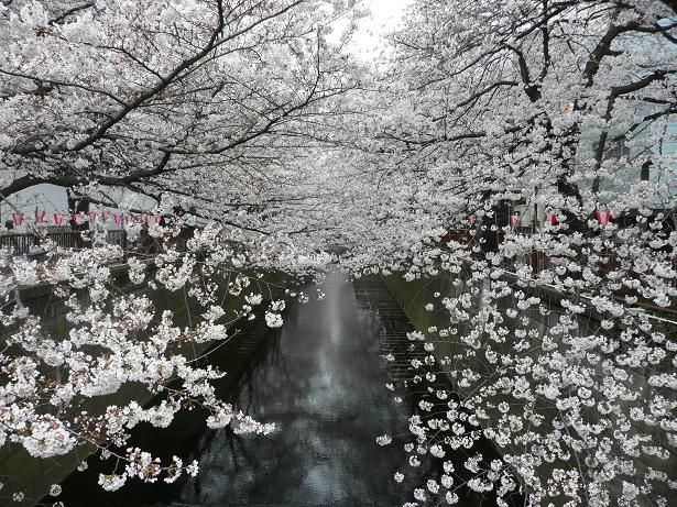 目黒川散策_a0050728_2311032.jpg