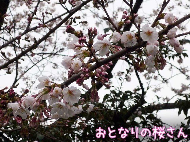 お花見散歩_c0062832_18182364.jpg