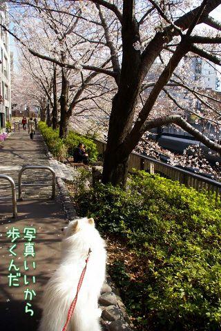 お花見散歩_c0062832_1818789.jpg