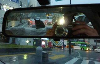 雨ドライブ猫 ろった編。_a0143140_238102.jpg