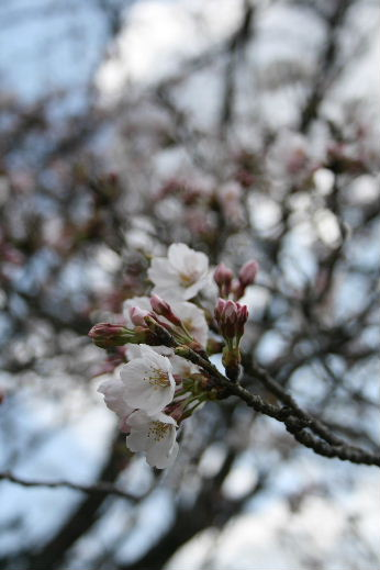 お花見・・・ちょっと早かった。寒かった。_f0082141_4464052.jpg