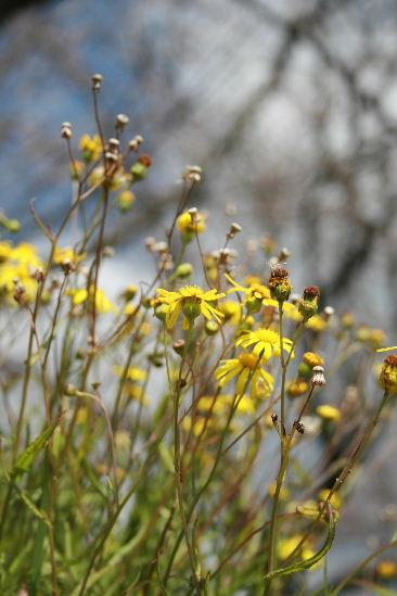 お花見・・・ちょっと早かった。寒かった。_f0082141_450462.jpg