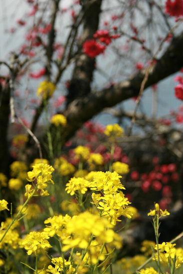 お花見・・・ちょっと早かった。寒かった。_f0082141_4511284.jpg