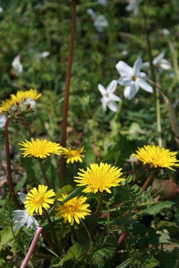 お花見・・・ちょっと早かった。寒かった。_f0082141_4512332.jpg