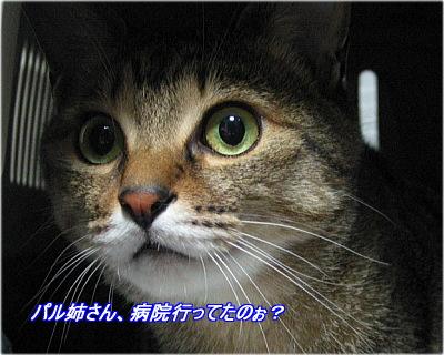 b0097848_194599.jpg