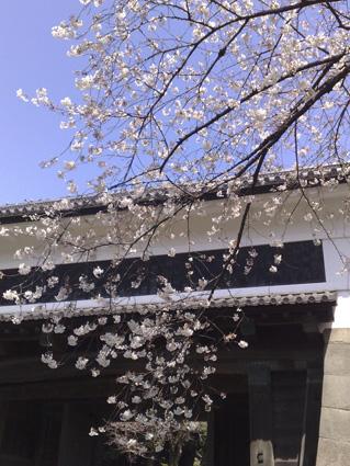 桜のシーズン_a0086851_041358.jpg
