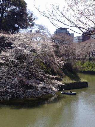 桜のシーズン_a0086851_0472021.jpg