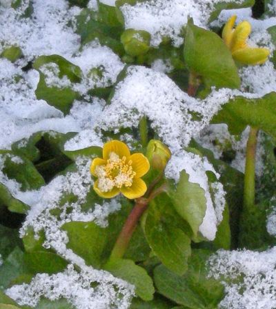 3月30日 なごり雪かな?_a0001354_2157223.jpg