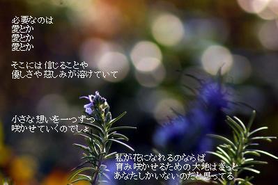b0165858_1121339.jpg