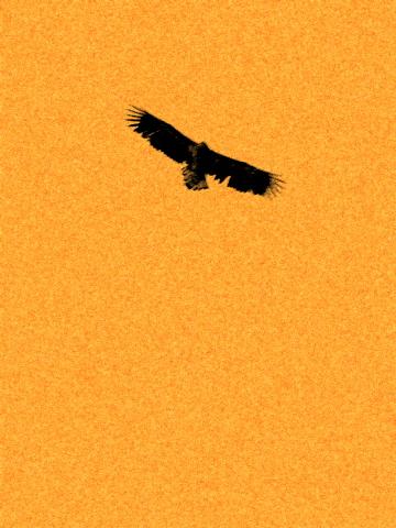 巫女愛沙⇔蒼鷺、冬と夏の交差点。_b0165760_22444690.jpg
