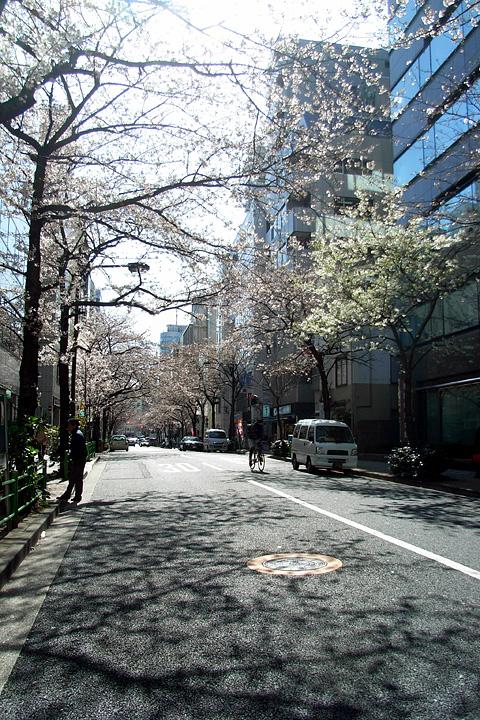 道ばたの桜 (東京 3/30・31)_b0006870_12515292.jpg