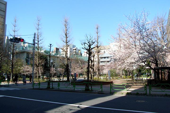 道ばたの桜 (東京 3/30・31)_b0006870_12521788.jpg