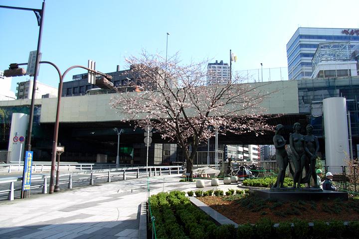 道ばたの桜 (東京 3/30・31)_b0006870_12523395.jpg