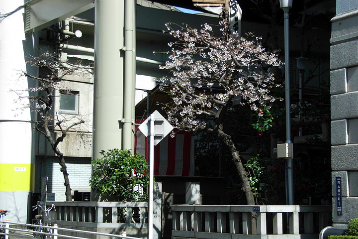 道ばたの桜 (東京 3/30・31)_b0006870_12524786.jpg