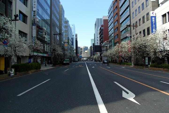 道ばたの桜 (東京 3/30・31)_b0006870_12533011.jpg