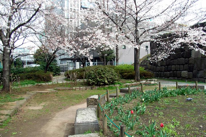 道ばたの桜 (東京 3/30・31)_b0006870_12541046.jpg