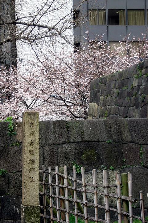道ばたの桜 (東京 3/30・31)_b0006870_12542411.jpg