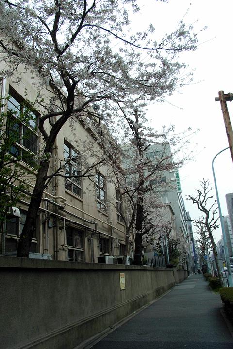 道ばたの桜 (東京 3/30・31)_b0006870_12543890.jpg