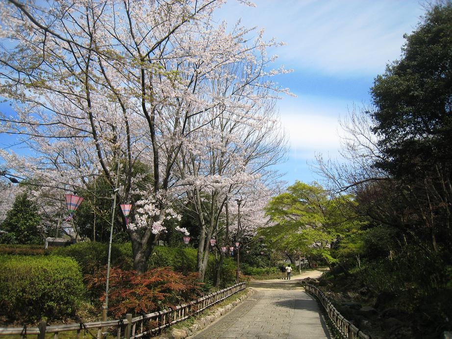 浜松城桜満開_a0107574_0111795.jpg