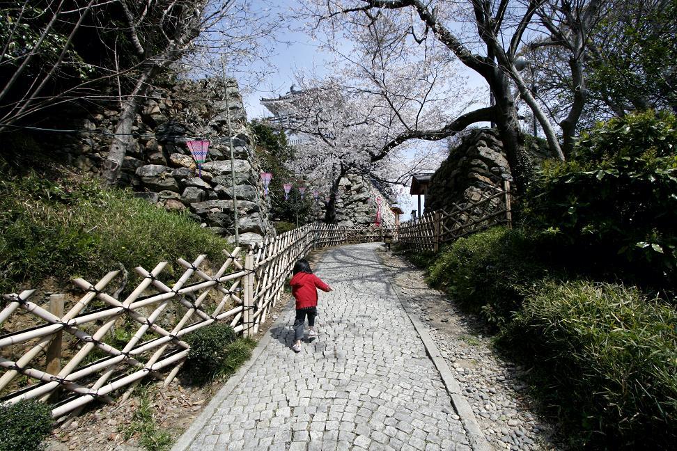 浜松城桜満開_a0107574_0195844.jpg