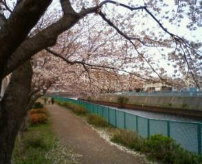桜と…_b0011075_18324440.jpg