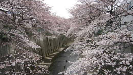 今日の桜_c0052576_1743745.jpg