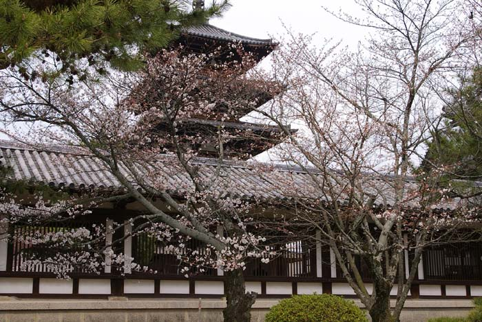 法隆寺桜景_f0130879_0314488.jpg