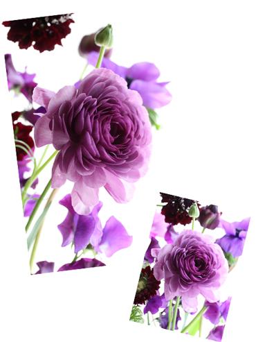 les  belle  fleurs_f0127281_13343654.jpg