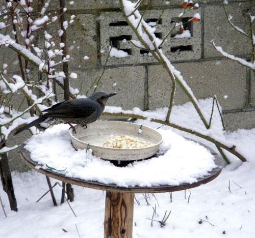 なごり雪_a0136293_16203945.jpg