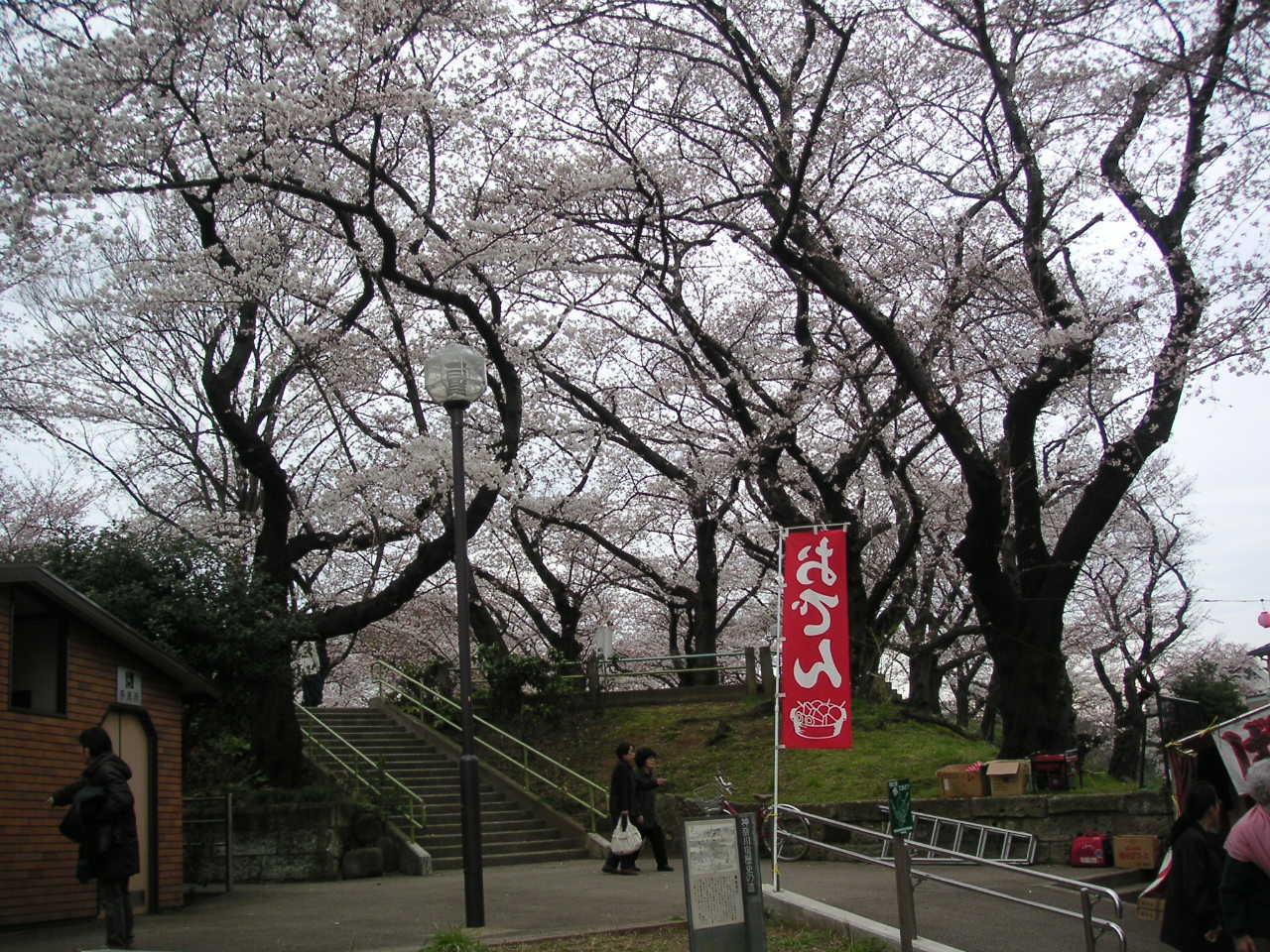 幸谷公園のさくら_e0017093_16232449.jpg