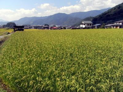 農業用水路清掃活動_c0193896_13525636.jpg