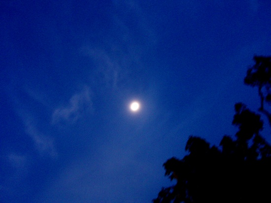 Blue Moon_c0027701_1644222.jpg