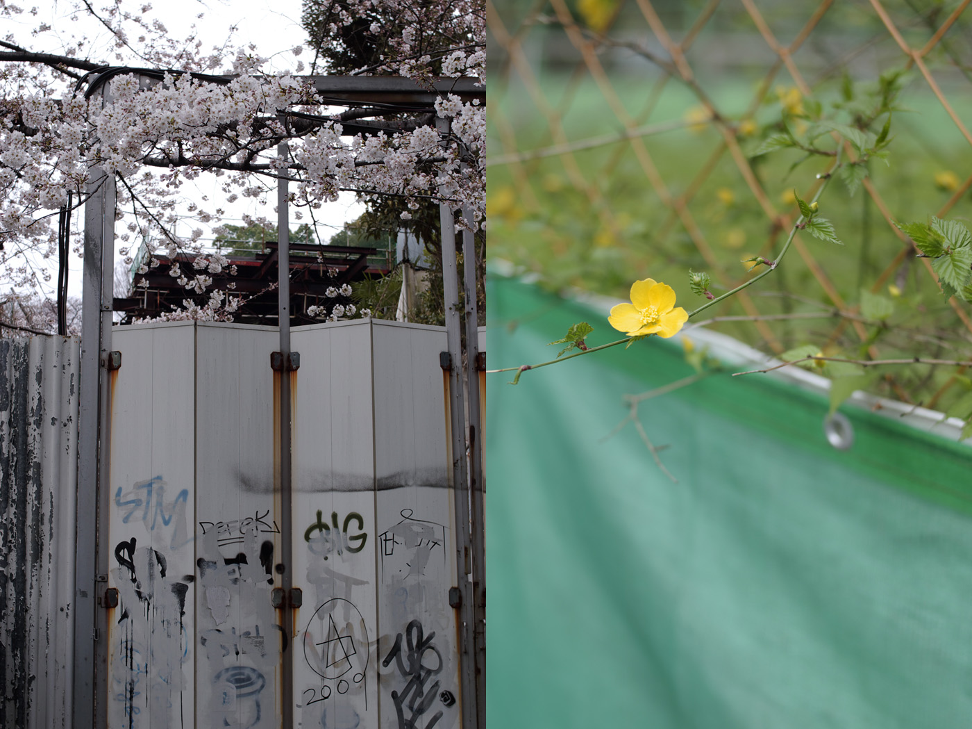 2010、青葉台の花、その2。_c0120903_054829.jpg