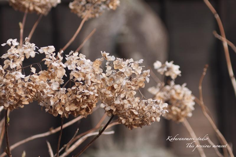 海岸寺もゆっくりゆっくり冬から春へ_c0137403_11244515.jpg