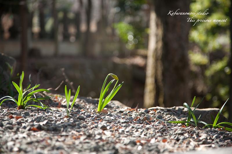 海岸寺もゆっくりゆっくり冬から春へ_c0137403_114035.jpg