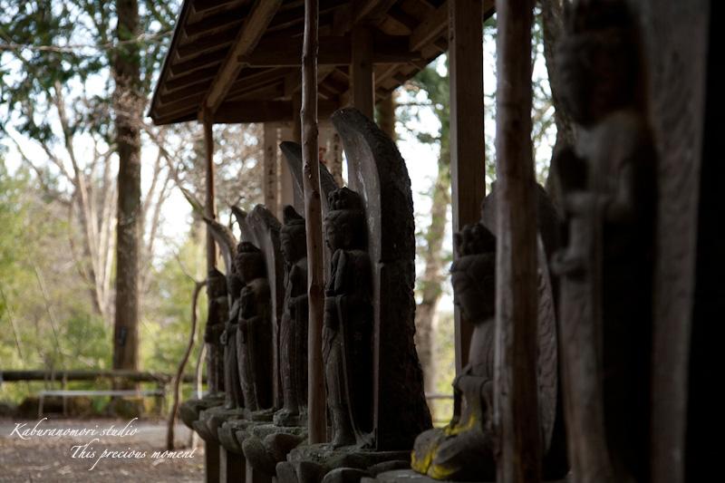 海岸寺もゆっくりゆっくり冬から春へ_c0137403_1162822.jpg