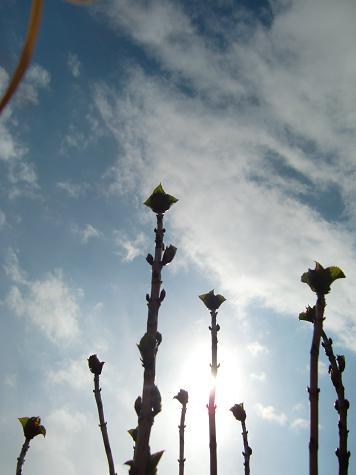 花より団子_a0122205_19173523.jpg