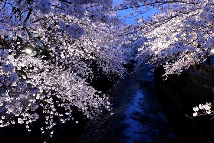 桜咲く_c0173405_2316273.jpg