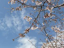 春風_e0116207_23352891.jpg