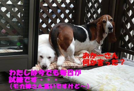 f0121712_744331.jpg