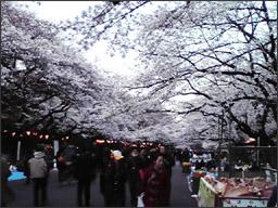 #289 「春です」_f0079218_1101280.jpg
