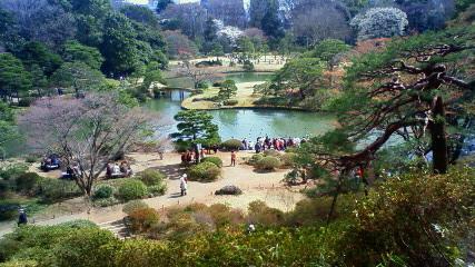 六義園の枝垂れ桜です_f0140343_1621318.jpg