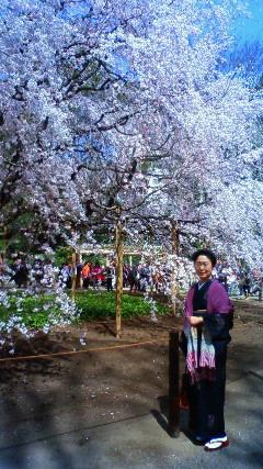 六義園の枝垂れ桜です_f0140343_1621327.jpg
