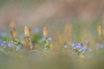 春の歩み_c0156749_18234413.jpg
